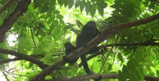 Un voyage au cœur de la nature costaricienne